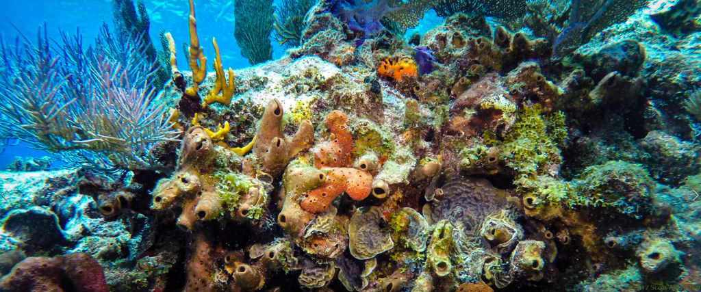 Molasses Reef - 2